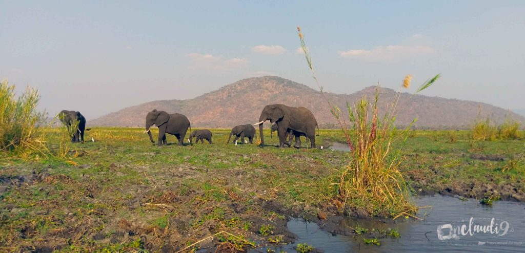 These are Elephants in Liwonde National Park in the south of Malawi.