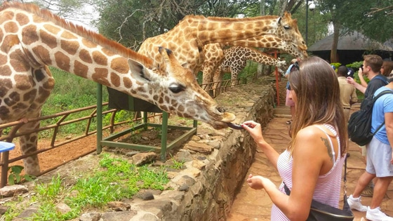 This is at the Giraffe Center in Nairobi.