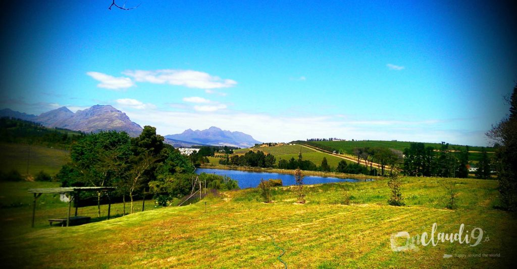 These are the Winelands in South Africa.