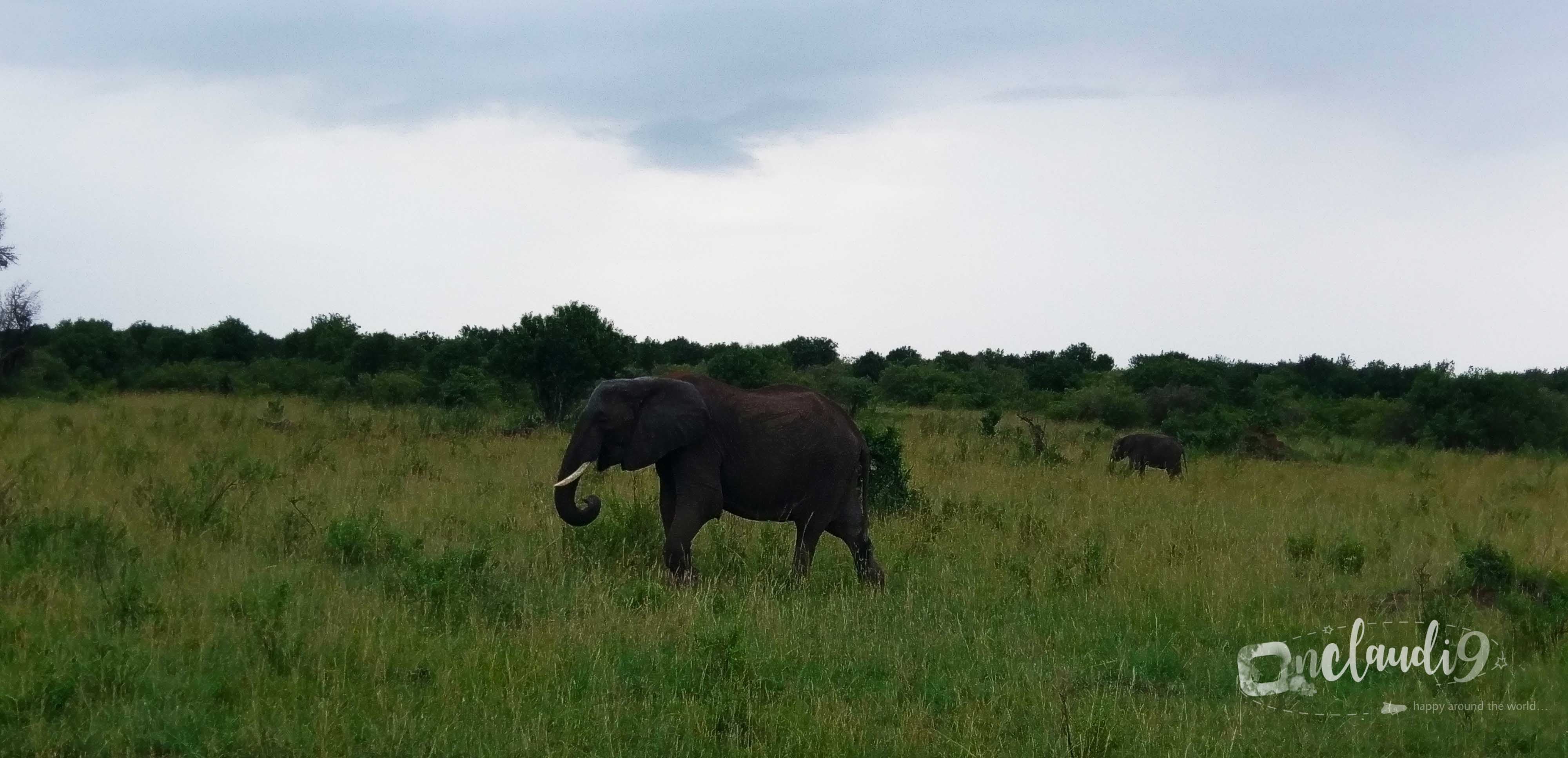 This is an Elephant at Maasai Mara National Park in Kenya.